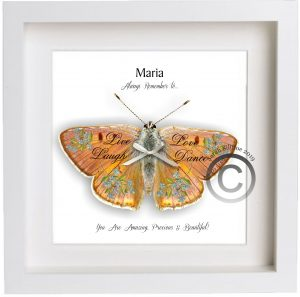 3D Butterfly Framed Personalised Name 2