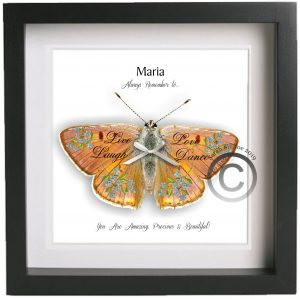 3D Butterfly Framed Personalised Name