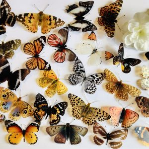 3D Butterfly Embellishments